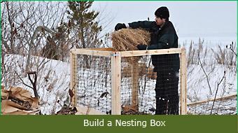 Build a Nesting Box