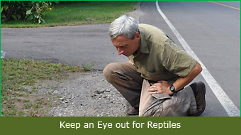 Keep an Eye out for Reptiles
